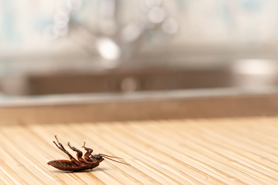 How to Keep Pests Out of Your Maryland Rental Properties